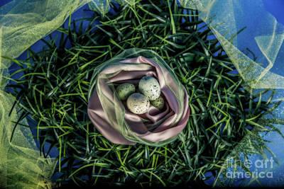 Eggs In A Nest  Original