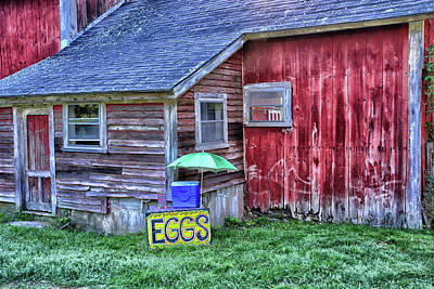 Eggs Art Print by Mike Martin