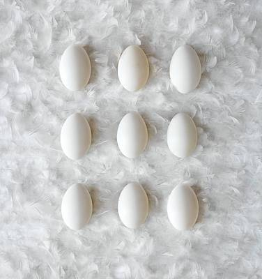 Number 3 Photograph - Eggs On Feathers, Conceptual Image by Paul Biddle