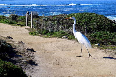 Photograph - Egret 01 31 17 Walk This Way by Joyce Dickens