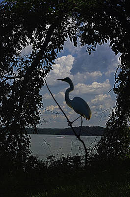 Flycatcher Digital Art - Egret Against Clowds by Ron Kruger