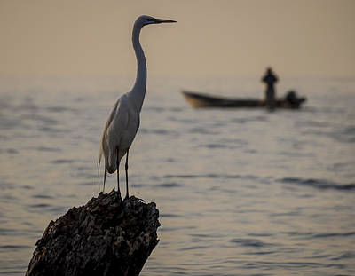 Egret And Boat Art Print by Dane Strom
