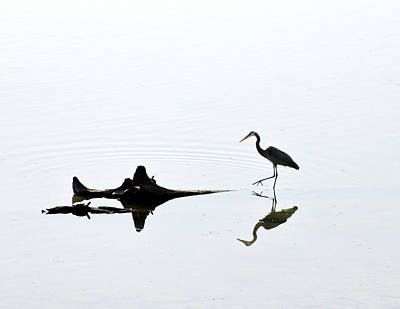 Photograph - Egret And Reflection by Menachem Ganon