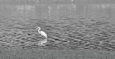 Photograph - Egret And Water by Vonda Barnett