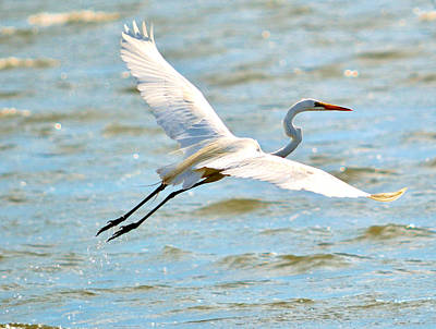 Photograph - Egret Arms Wide Open by William Bartholomew