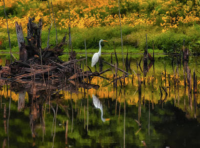 Photograph - Egret Art  by Richard Kopchock