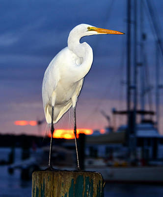 Photograph - Egret At The Docks by David Lee Thompson
