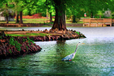 Photograph - Heron At Honor Heights by Tamyra Ayles