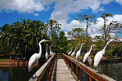 Photograph - Egret Boardwalk by Debbie Oppermann