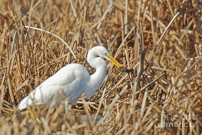 Frog Photograph - Egret Breakfast by Natural Focal Point Photography