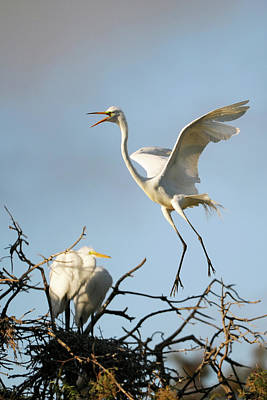 Photograph - Egret by Catherine Lau
