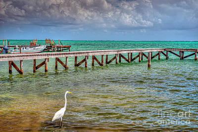 Photograph - Egret Caye Caulker Belize  by David Zanzinger