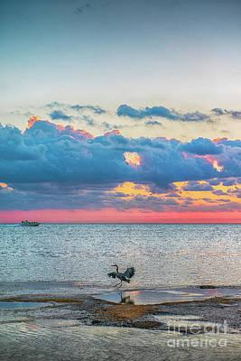 Photograph - Egret Dancing In The Sunlight by David Zanzinger