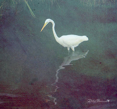 Photograph - Egret Dreams by Phil Mancuso