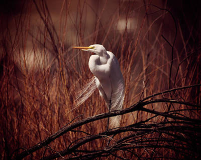 Photograph - Egret by Erica Kinsella