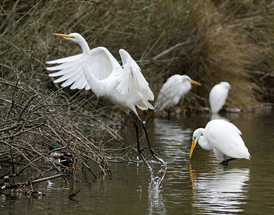 Egret Exit Art Print by George Randy Bass