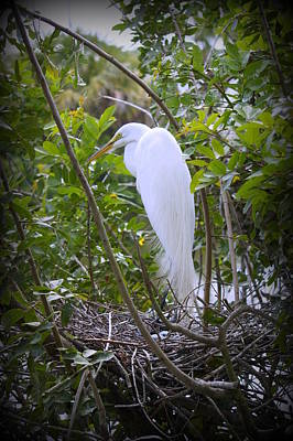 Photograph - Egret Family by Laurie Perry