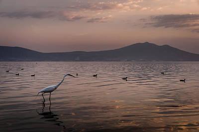 Egret Fishing In Lake At Sunset Art Print by Dane Strom