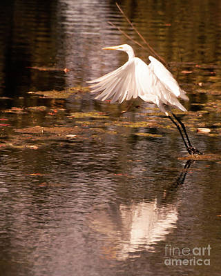 Photograph - Egret Flight by Susan Cliett