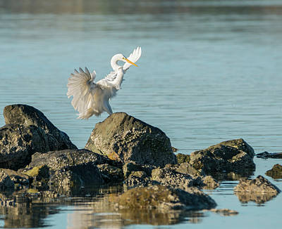 Photograph - Egret Flourish by Loree Johnson
