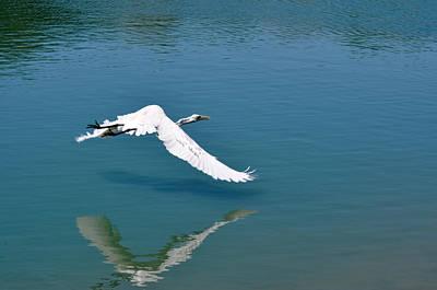 Egret Flying Art Print by Teresa Blanton