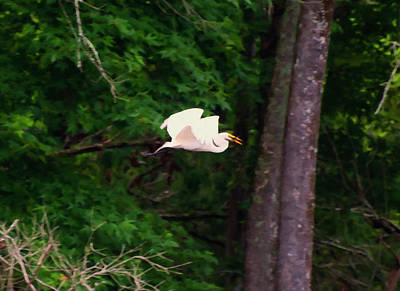 Digital Art - Egret Flying With A Caught Fish Digital Oil by Chris Flees