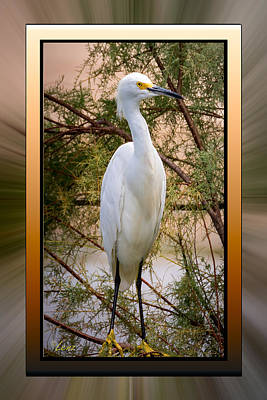 Lenz Wall Art - Photograph - Egret Framed by George Lenz