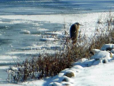 Egret Frozen Lake Art Print