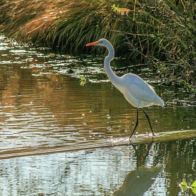 Forest Park Photograph - Egret by Garry McMichael