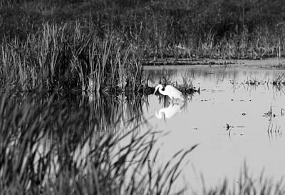 Photograph - Egret - Horicon Marsh - Wisconsin by Steven Ralser