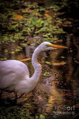 Photograph - Egret Hunting by Claudia M Photography