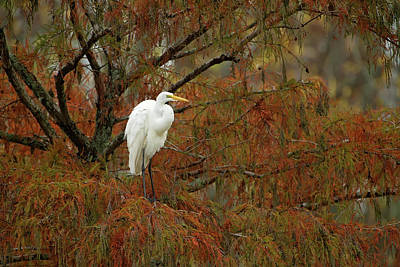 Egret In Autumn Art Print
