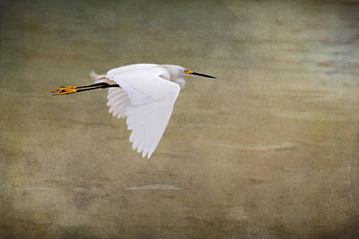 Beach Photograph - Egret In Flight 46 By Darrell Hutto by J Darrell Hutto