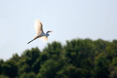 Photograph - Egret In Flight by David Dunham
