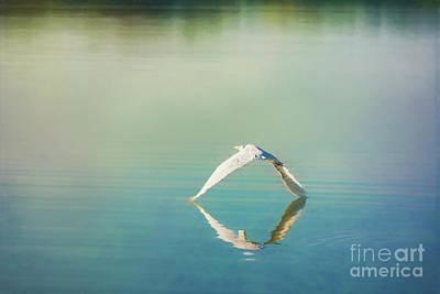 Photograph - Egret In Flight by Stuart Row