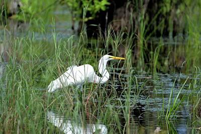 Egret In Grasses Art Print by Tamra Lockard