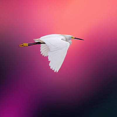 Bird Photograph - Egret In Red By Darrell Hutto by J Darrell Hutto