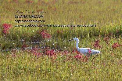 Photograph - Egret In Red by Captain Debbie Ritter