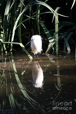 Photograph - Egret In Reed by Balanced Art