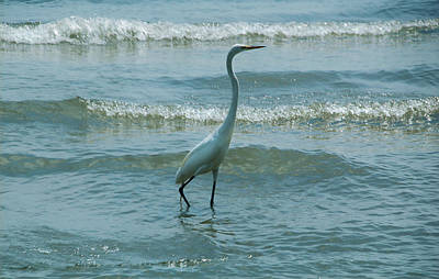 Photograph - Egret In The Evening by Kathleen Stephens