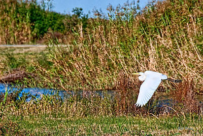 Egret In The Marsh Art Print by Bill Perry