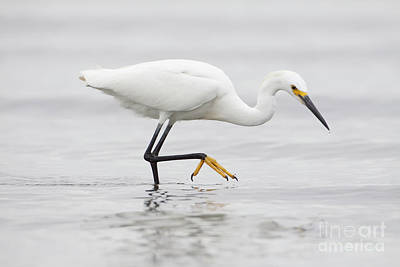 Photograph - Egret In The Ocean by Ruth Jolly