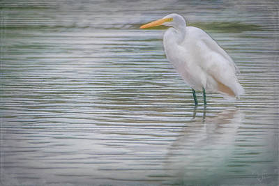 Photograph - Egret In The Shallows by Teresa Wilson