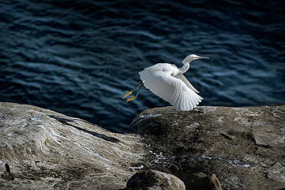 Photograph - Egret by James David Phenicie