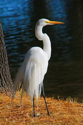 Photograph - Egret by Kathryn Meyer