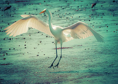 Digital Art - Egret Landing by Melinda Dreyer