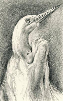 Drawing - Egret Looking Heavenward by MM Anderson