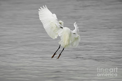 Target Threshold Nature - Egret making a landing by Jacques Jacobsz