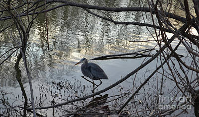 Bird Watching Photograph - Egret, Martling's Pond by Anthony Butera