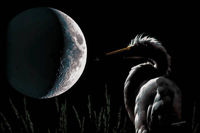 Photograph - Egret Moon Black Rose by S Michael Basly